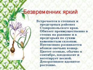 Безвременник яркий Встречается в степных и предгорных районах Ставропольского кр