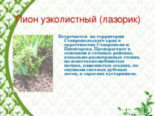 Пион узколистный (лазорик) Встречается на территории Ставропольского края в окре