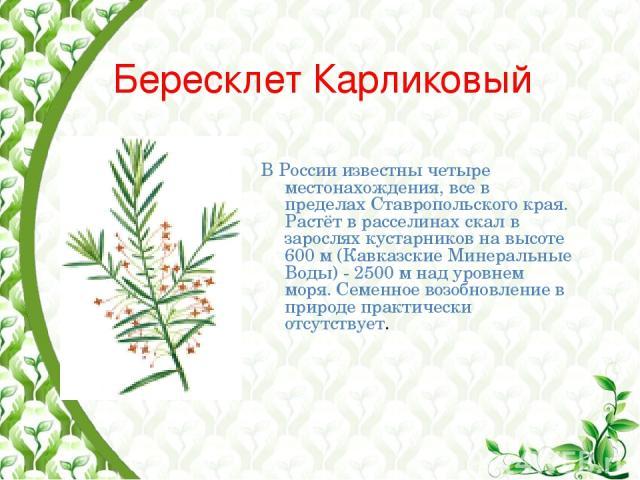 Бересклет Карликовый В России известны четыре местонахождения, все в пределах Ставропольского края. Растёт в расселинах скал в зарослях кустарников на высоте 600 м (Кавказские Минеральные Воды) - 2500 м над уровнем моря. Семенное возобновление в при…