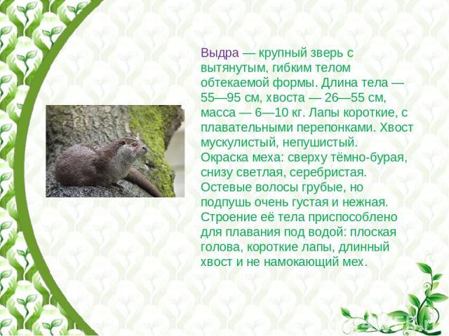 Выдра— крупный зверь с вытянутым, гибким телом обтекаемой формы. Длина тела— 55—95см, хвоста— 26—55см, масса— 6—10кг. Лапы короткие, с плавательными перепонками. Хвост мускулистый, непушистый. Окраска меха: сверху тёмно-бурая, снизу светлая, …