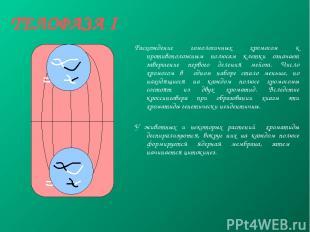 ТЕЛОФАЗА I Расхождение гомологичных хромосом к противоположным полюсам клетки оз