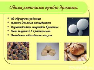 Одноклеточные грибы-дрожжи Не образуют грибницы Клетки делятся почкованием Осуще
