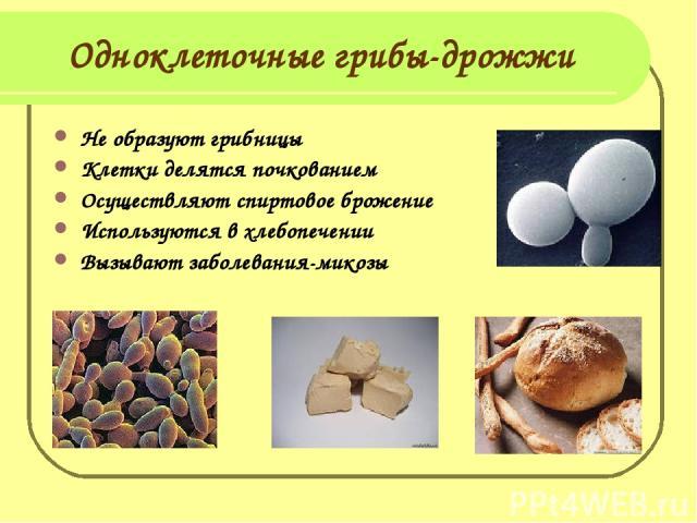 Одноклеточные грибы-дрожжи Не образуют грибницы Клетки делятся почкованием Осуществляют спиртовое брожение Используются в хлебопечении Вызывают заболевания-микозы