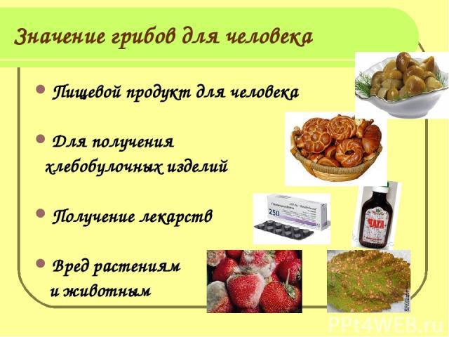 Значение грибов для человека Пищевой продукт для человека Для получения хлебобулочных изделий Получение лекарств Вред растениям и животным