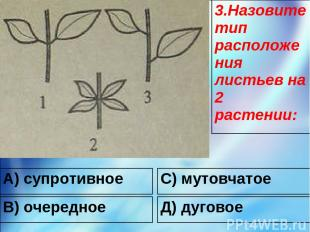 А) супротивное С) мутовчатое В) очередное Д) дуговое 3.Назовите тип расположения