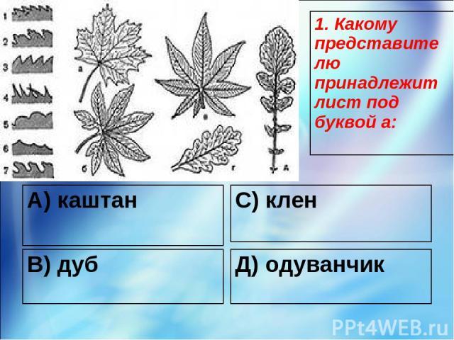 А) каштан С) клен В) дуб Д) одуванчик 1. Какому представителю принадлежит лист под буквой а: