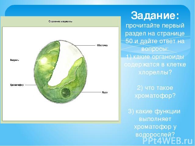 Задание: прочитайте первый раздел на странице 50 и дайте ответ на вопросы: 1) какие органоиды содержатся в клетке хлореллы? 2) что такое хроматофор? 3) какие функции выполняет хроматофор у водорослей?