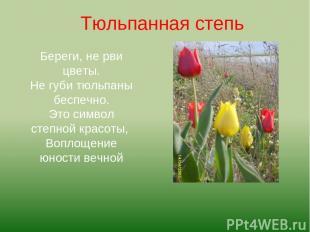 Береги, не рви цветы. Не губи тюльпаны беспечно. Это символ степной красоты, Воп
