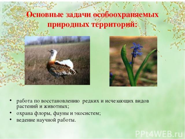 Основные задачи особоохраняемых природных территорий: работа по восстановлению редких и исчезающих видов растений и животных; охрана флоры, фауны и экосистем; ведение научной работы.