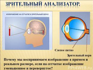 Зрительный нерв Слепое пятно Почему мы воспринимаем изображение в прямом и реаль