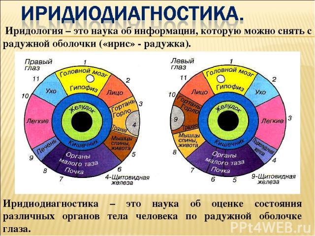 Иридиодиагностика – это наука об оценке состояния различных органов тела человека по радужной оболочке глаза. Иридология – это наука об информации, которую можно снять с радужной оболочки («ирис» - радужка).