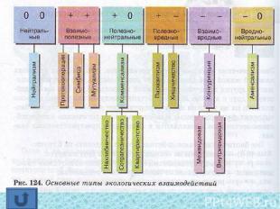 Все биотические взаимодействия можно разделить на 6 групп: — (0 0) — организм