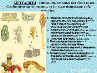 Широко распространён симбиоз животных (и человека) с микроорганизмами, например