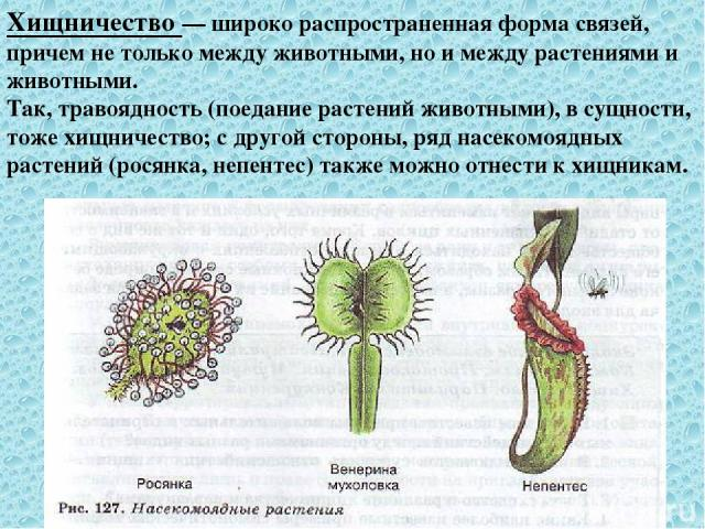 + + Мутуализм- в естественных условиях популяции не могут существовать друг без друга (пример: симбиоз гриба и водоросли в лишайнике) + + Протокооперация- форма симбиоза, при которой совместное существование выгодно, но не обязательно для сожителе…