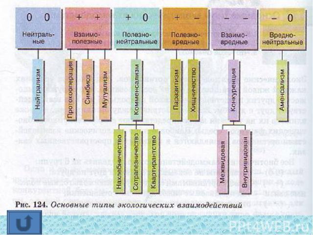 Все биотические взаимодействия можно разделить на 6 групп: — (0 0) — организмы не оказывают влияния друг на друга; — (+ +) — между организмами существуют взаимовыгодные полезные связи — так называемые симбиотические отношения; — (- -) — отн…