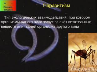 Паразитизм Тип экологических взаимодействий, при котором организмы одного вида ж