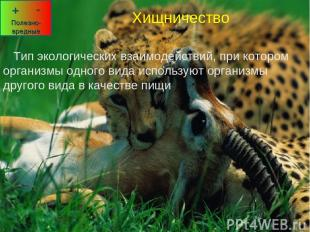 Хищничество Тип экологических взаимодействий, при котором организмы одного вида