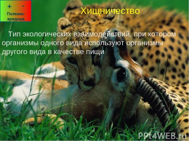 Хищничество Тип экологических взаимодействий, при котором организмы одного вида используют организмы другого вида в качестве пищи Хищничество Тип экологических взаимодействий, при котором организмы одного вида используют организмы другого вида в кач…