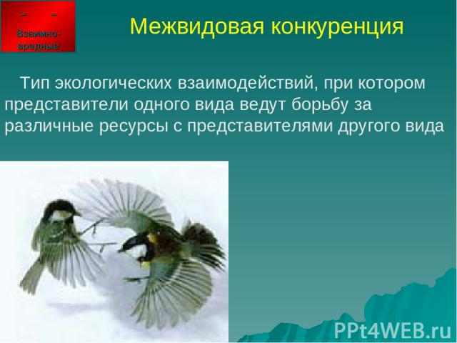 Межвидовая конкуренция Тип экологических взаимодействий, при котором представители одного вида ведут борьбу за различные ресурсы с представителями другого вида - - Взаимно-вредные