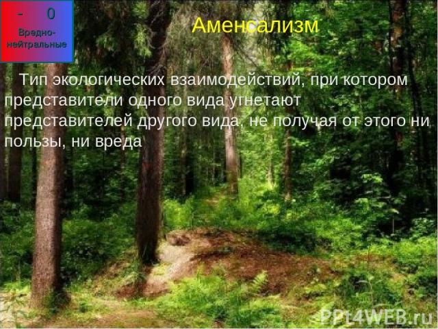 Аменсализм Тип экологических взаимодействий, при котором представители одного вида угнетают представителей другого вида, не получая от этого ни пользы, ни вреда Аменсализм Тип экологических взаимодействий, при котором представители одного вида угнет…
