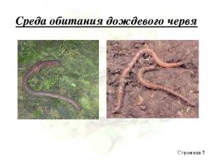Среда обитания дождевого червя Страница 2