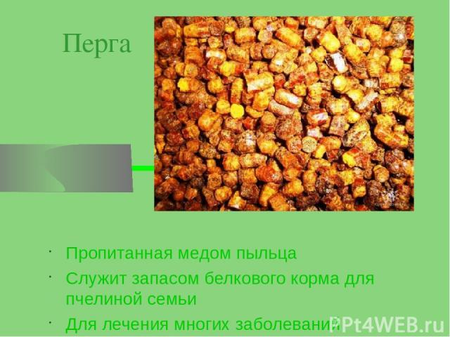 Перга Пропитанная медом пыльца Служит запасом белкового корма для пчелиной семьи Для лечения многих заболеваний