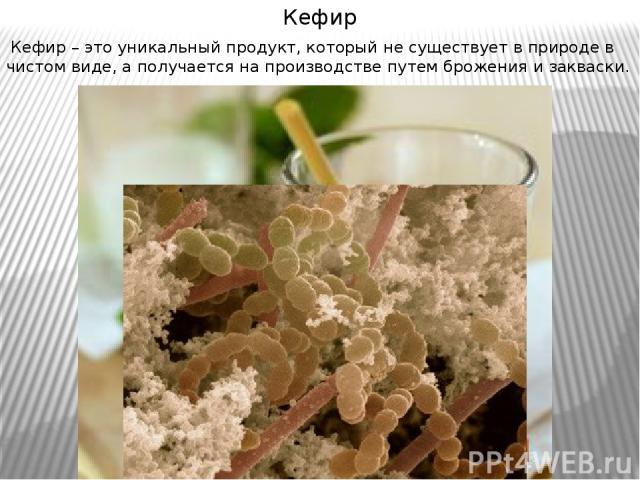 Кефир Кефир – это уникальный продукт, который не существует в природе в чистом виде, а получается на производстве путем брожения и закваски.