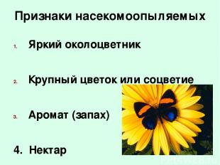 Признаки насекомоопыляемых Яркий околоцветник Крупный цветок или соцветие Аромат
