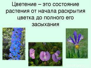 Цветение – это состояние растения от начала раскрытия цветка до полного его засы