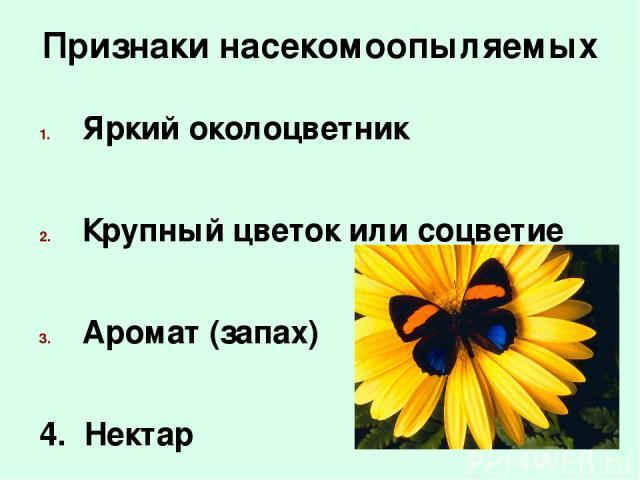 Признаки насекомоопыляемых Яркий околоцветник Крупный цветок или соцветие Аромат (запах) 4. Нектар