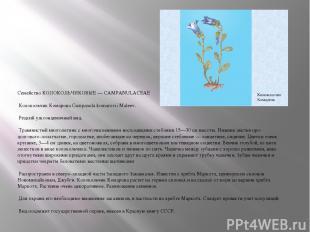 Семейство КОЛОКОЛЬЧИКОВЫЕ — CAMPANULACEAE Колокольчик Комарова Campanula komarov