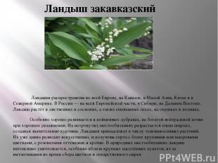 Ландыш закавказский Ландыши распространены во всей Европе, на Кавказе, в Малой А