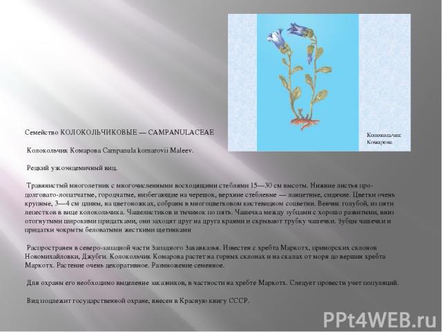Семейство КОЛОКОЛЬЧИКОВЫЕ — CAMPANULACEAE Колокольчик Комарова Campanula komarovii Maleev. Редкий узкоэндемичный вид. Травянистый многолетник с многочисленными восходящими стеблями 15—30 см высоты. Нижние листья про-долговато-лопатчатые, городчатые,…