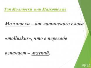 Тип Моллюски или Мягкотелые Моллюски – от латинского слова «molluskus», что в пе