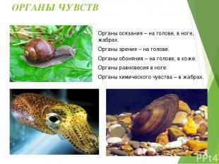 Отличительные черты: Среда обитания моллюсков: Моря, пресные водоёмы, суша. Симм