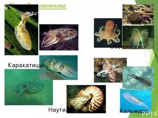 Проверь свои знания! Тест – тренажёр от осьминога, виноградной улитки и морского
