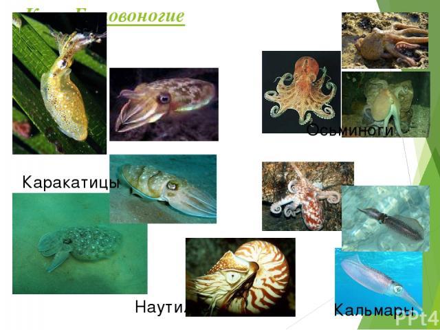 Проверь свои знания! Тест – тренажёр от осьминога, виноградной улитки и морского гребешка