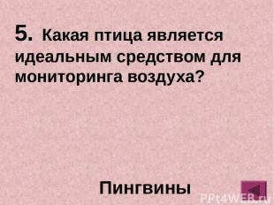 сова ОТВЕТ