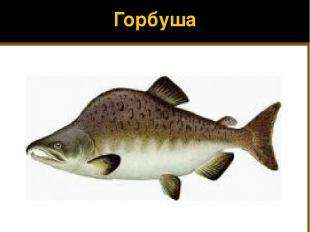 Горбуша