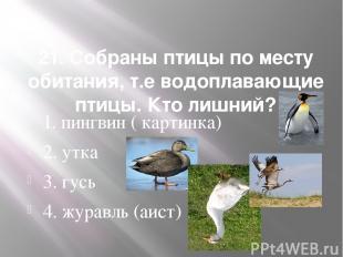 21. Собраны птицы по месту обитания, т.е водоплавающие птицы. Кто лишний? 1. пин