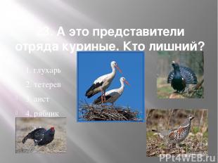 23. А это представители отряда куриные. Кто лишний? 1. глухарь 2. тетерев 3. аис