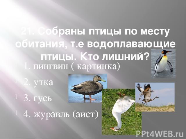 21. Собраны птицы по месту обитания, т.е водоплавающие птицы. Кто лишний? 1. пингвин ( картинка) 2. утка 3. гусь 4. журавль (аист)
