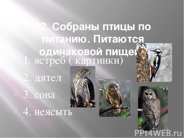 22. Собраны птицы по питанию. Питаются одинаковой пищей. 1. ястреб ( картинки) 2. дятел 3. сова 4. неясыть