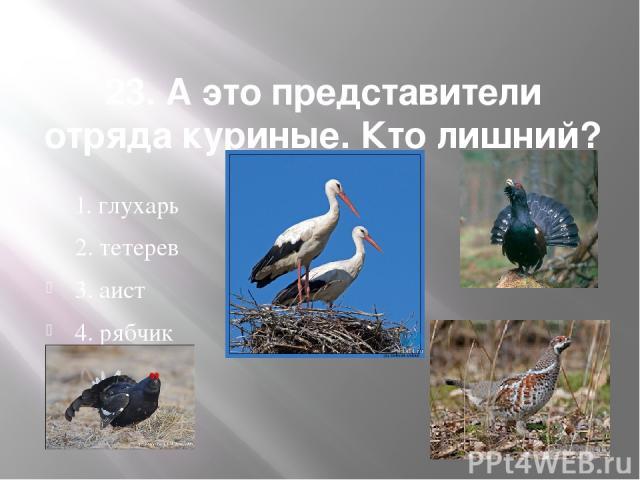 23. А это представители отряда куриные. Кто лишний? 1. глухарь 2. тетерев 3. аист 4. рябчик