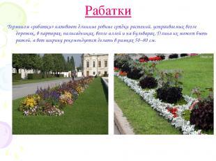 Рабатки Термином «рабатки» называют длинные ровные грядки растений, устраиваемых