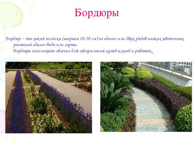 Бордюры Бордюр – это узкая полоска (ширина 10-30 см) из одного или двух рядов низких цветочных растений одного вида или сорта. Бордюры используют обычно для оформления краев клумб и рабаток.