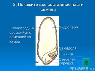 2. Покажите все составные части семени Околоплодник, сросшийся с семенной ко- жу