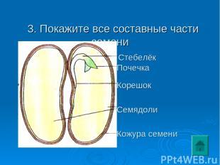 3. Покажите все составные части семени Семядоли Кожура семени Корешок Стебелёк П