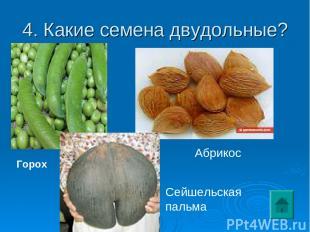4. Какие семена двудольные? Горох Сейшельская пальма Абрикос