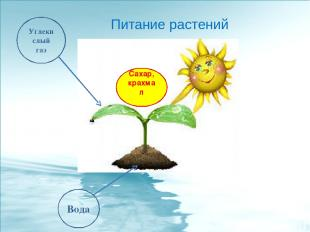 Углекислый газ Вода Сахар, крахмал Питание растений